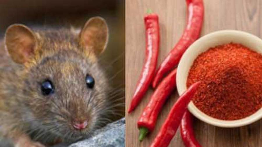 Mẹ giã tỏi rải góc bếp, tưởng điều gì bí hiểm hóa ra là chiêu bà đuổi sạch đám chuột hôi hám-4