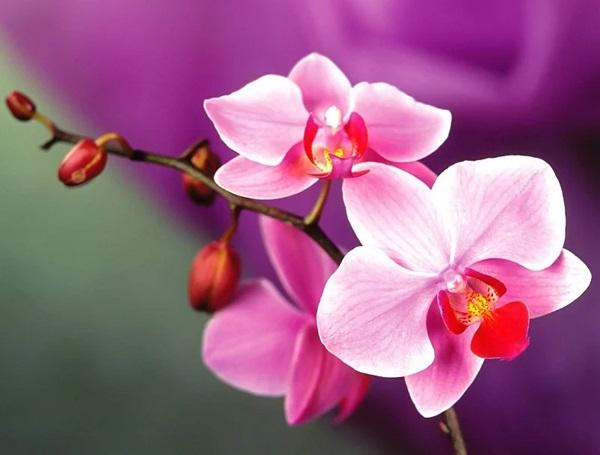 Trắc nghiệm: Chọn bông hoa yêu thích nhất và khám phá tính cách tiềm ẩn của bạn-1