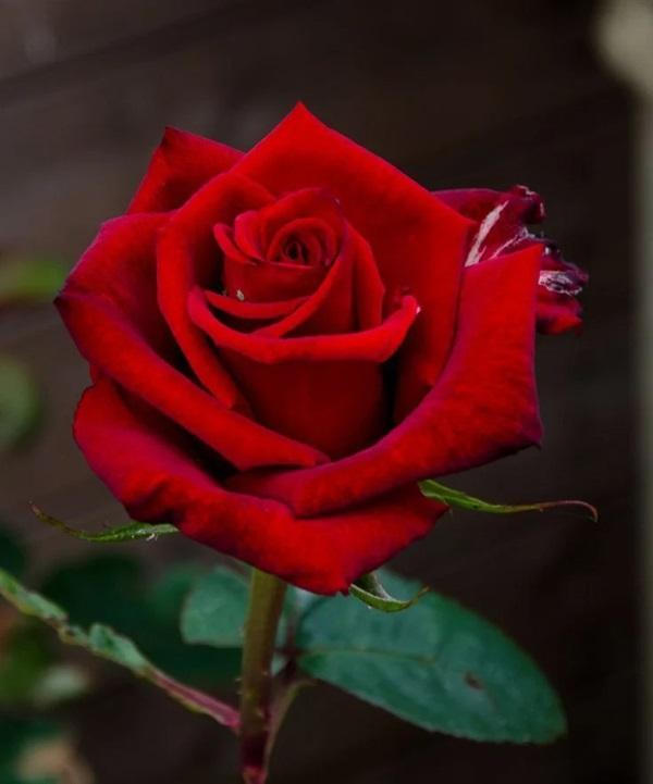Trắc nghiệm: Chọn bông hoa yêu thích nhất và khám phá tính cách tiềm ẩn của bạn-2