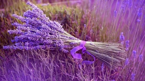 Trắc nghiệm: Chọn bông hoa yêu thích nhất và khám phá tính cách tiềm ẩn của bạn-4