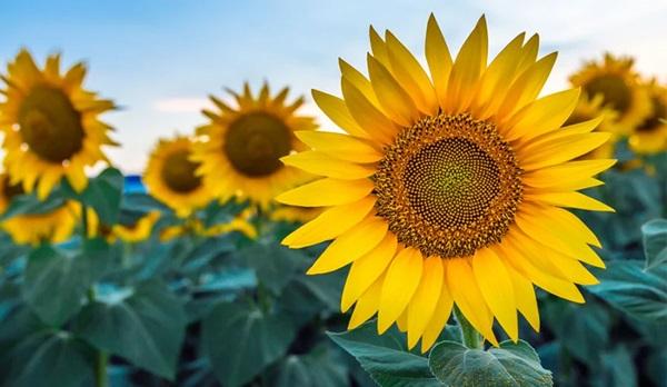 Trắc nghiệm: Chọn bông hoa yêu thích nhất và khám phá tính cách tiềm ẩn của bạn-5