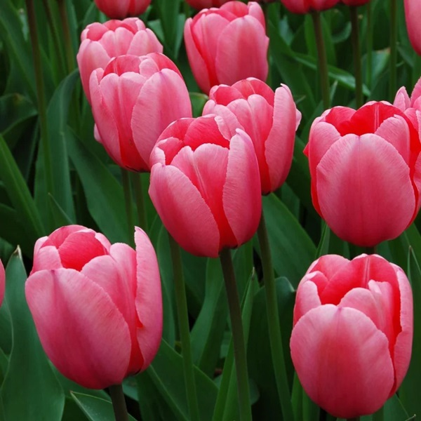 Trắc nghiệm: Chọn bông hoa yêu thích nhất và khám phá tính cách tiềm ẩn của bạn-7