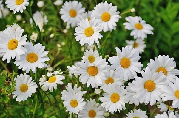 Trắc nghiệm: Chọn bông hoa yêu thích nhất và khám phá tính cách tiềm ẩn của bạn-8