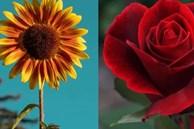 Trắc nghiệm: Chọn bông hoa yêu thích nhất và khám phá tính cách tiềm ẩn của bạn