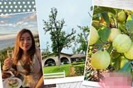 Lấy chồng giàu, mẹ Việt sang Mỹ quản lý sòng bài, làm vườn cây 4000m2 sai trĩu trịt