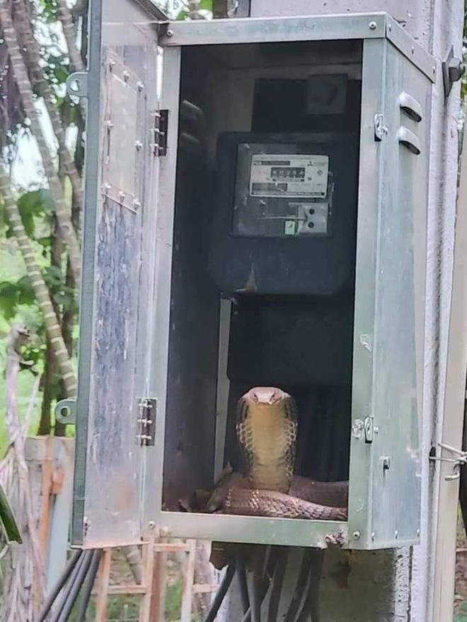 Phút hoảng hồn khi mở tủ điện: Bé Na nằm cuộn bên trong, hồn nhiên vươn đầu ra sưởi nắng-2