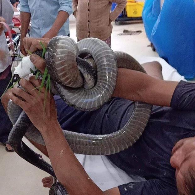 Gia cảnh khó khăn của người đàn ông cầm đầu rắn hổ mang vào bệnh viện cấp cứu: Bị tai nạn giao thông, đi bắt rắn chạy ăn từng bữa-3