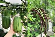 Mẹ đảm Sài Gòn trồng rau sân thượng tốt um như... rau quả 'đột biến'