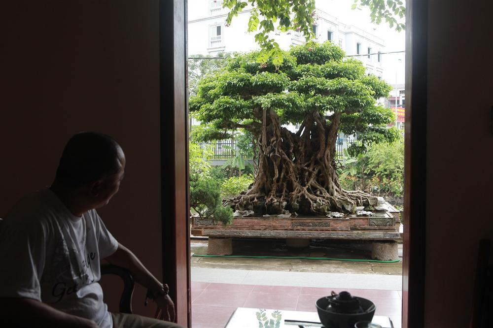Báu vật ẩn mình có tuổi đời 500 năm ở Hà Nội, trả 100 cây vàng không bán-1