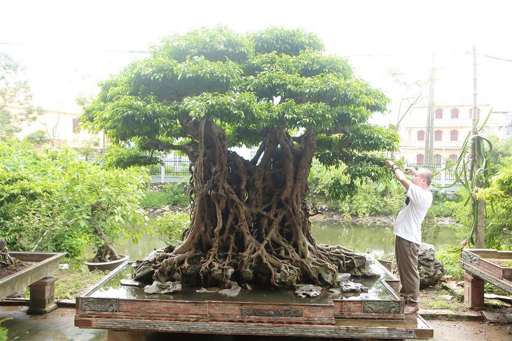 Báu vật ẩn mình có tuổi đời 500 năm ở Hà Nội, trả 100 cây vàng không bán-2