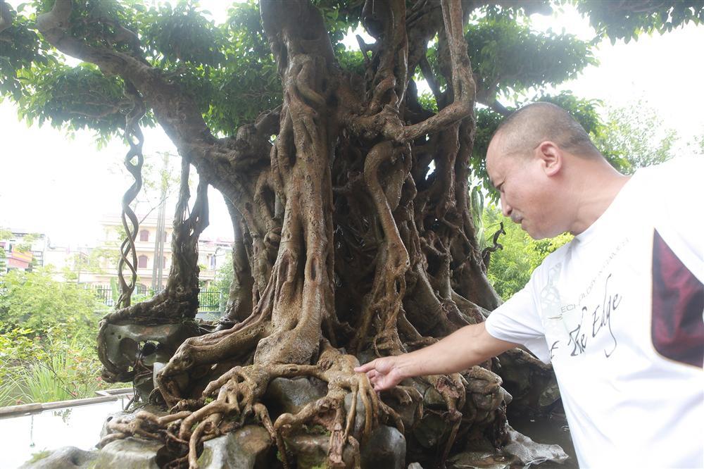 Báu vật ẩn mình có tuổi đời 500 năm ở Hà Nội, trả 100 cây vàng không bán-3