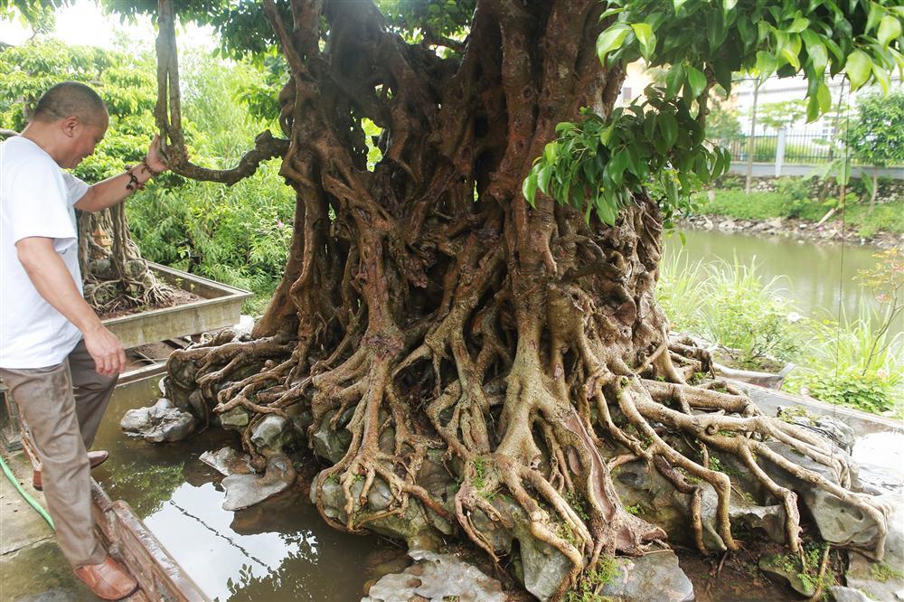 Báu vật ẩn mình có tuổi đời 500 năm ở Hà Nội, trả 100 cây vàng không bán-4