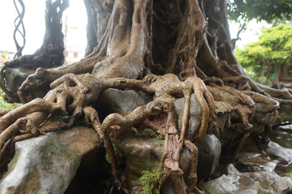 Báu vật ẩn mình có tuổi đời 500 năm ở Hà Nội, trả 100 cây vàng không bán-5
