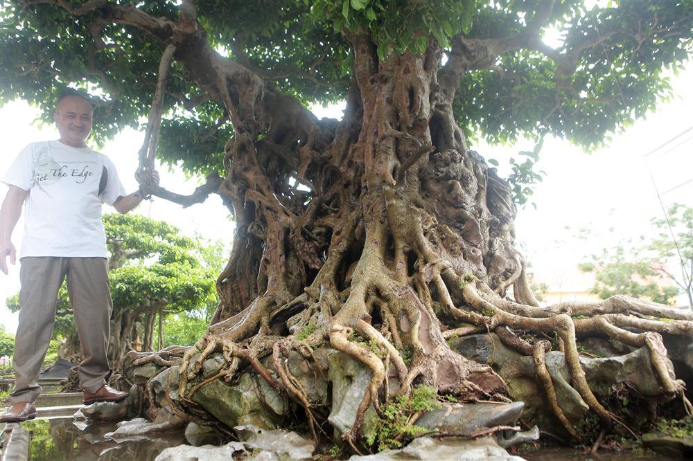 Báu vật ẩn mình có tuổi đời 500 năm ở Hà Nội, trả 100 cây vàng không bán-6
