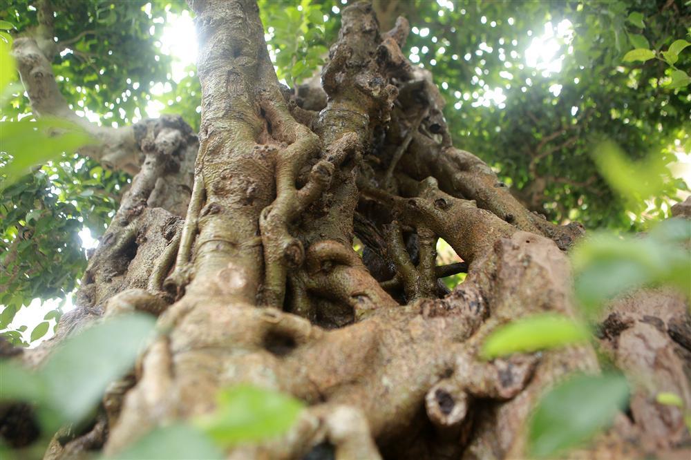 Báu vật ẩn mình có tuổi đời 500 năm ở Hà Nội, trả 100 cây vàng không bán-7
