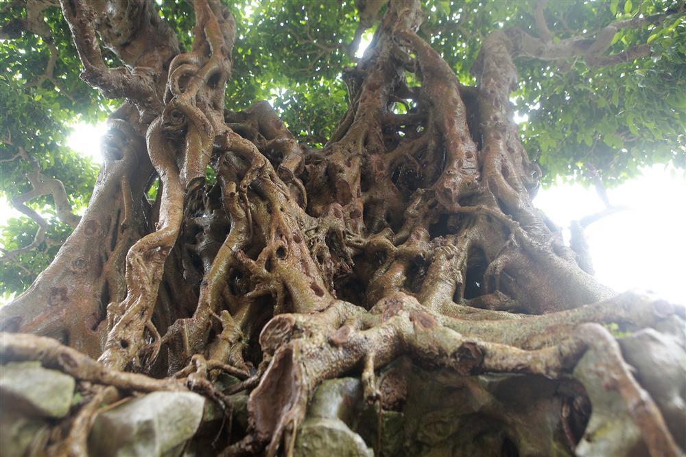 Báu vật ẩn mình có tuổi đời 500 năm ở Hà Nội, trả 100 cây vàng không bán-9
