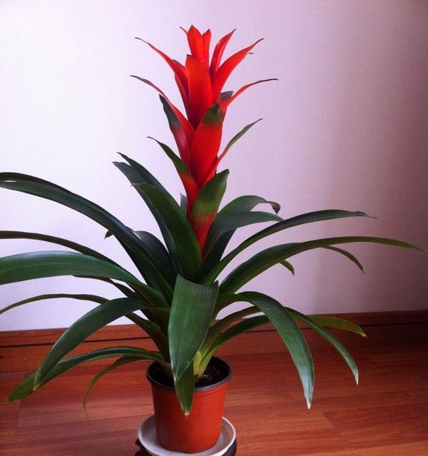 7 loại cây cảnh phong thủy trong phòng khách giúp gia chủ chiêu tài, kích lộc, gặp nhiều may mắn-6