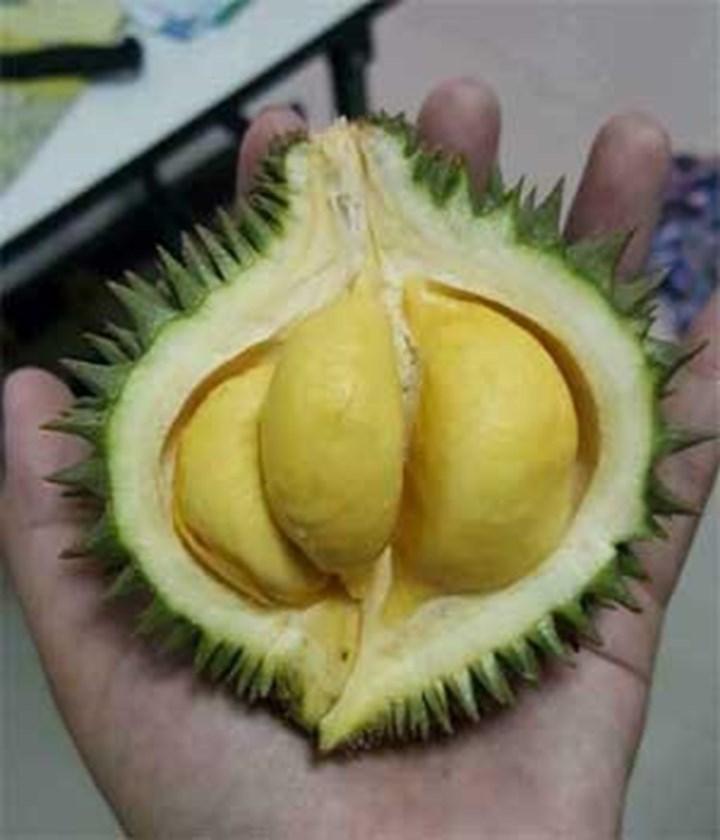Sầu riêng, dừa... bé bằng nắm tay gây sốt, người bán lãi tiền triệu mỗi ngày-4