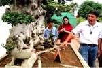 Dàn sơ ri bonsai cổ thụ, trĩu quả giá tiền tỷ của tướng cướp hoàn lương-11