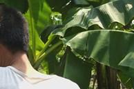Nghi phạm 44 tuổi thừa nhận hành vi hiếp dâm bé gái trong vườn chuối