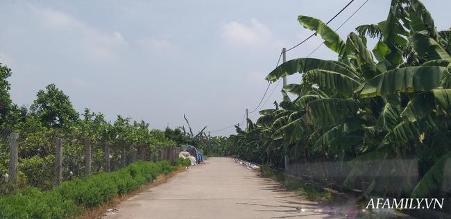 NÓNG: Đã có kết quả xét nghiệm ADN, bắt khẩn cấp đối tượng hiếp dâm bé gái 12 tuổi trong vườn chuối ở Hà Nội-2