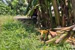 Kẻ chặn đường hiếp dâm bé gái 12 tuổi ở Hà Nội trong vườn chuối sống cùng xã với nạn nhân-2