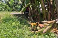 NÓNG: Đã có kết quả xét nghiệm ADN, bắt khẩn cấp đối tượng hiếp dâm bé gái 12 tuổi trong vườn chuối ở Hà Nội