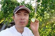 Danh hài Vân Sơn khoe vườn trái cây 1.200m2, quả rụng đỏ gốc ăn không hết