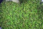 Kỳ lạ loại tôm bám chi chít trên cây, giá nửa triệu đồng/kg-5