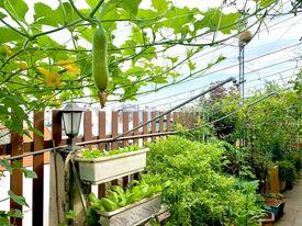 Ghen tị khu vườn 200m² ngập tràn hoa tươi và rau củ quả sạch trên sân thượng của nữ doanh nhân Sài Gòn-6