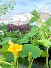 Ghen tị khu vườn 200m² ngập tràn hoa tươi và rau củ quả sạch trên sân thượng của nữ doanh nhân Sài Gòn-7