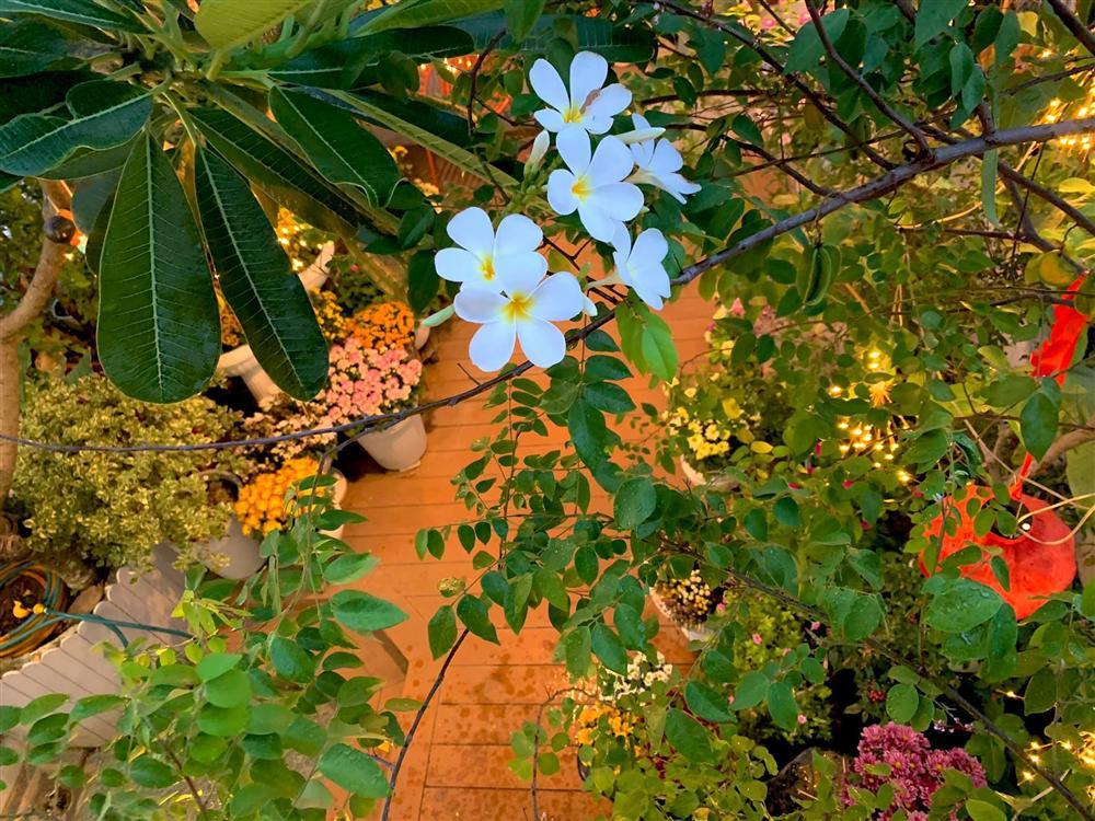 Ghen tị khu vườn 200m² ngập tràn hoa tươi và rau củ quả sạch trên sân thượng của nữ doanh nhân Sài Gòn-11