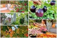 'Ghen tị' khu vườn 200m² ngập tràn hoa tươi và rau củ quả sạch trên sân thượng của nữ doanh nhân Sài Gòn