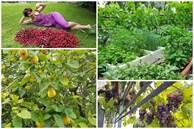 Khu vườn với đủ loại hoa thơm và trái ngọt của mẹ đảm quê Long An