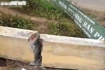 Tường đổ đè học sinh lớp 5 chết thương tâm: Không ai thừa nhận bức tường-3
