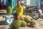 Mít Thái bất ngờ tăng giá gấp 3 lần, thương lái đổ về vườn lùng mua-4