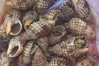 Khánh Hoà: Ăn ốc biển 'lạ', 1 người tử vong, 2 người nhập viện cấp cứu