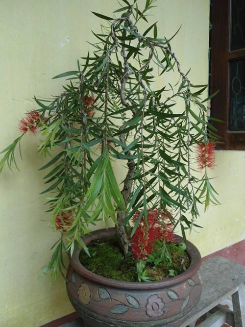 5 loại cây phá phong thủy, tuyệt đối không nên trồng trong nhà-3