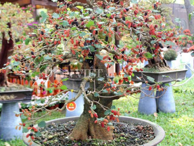 5 loại cây phá phong thủy, tuyệt đối không nên trồng trong nhà-4