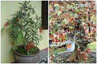 5 loại cây 'phá phong thủy', tuyệt đối không nên trồng trong nhà