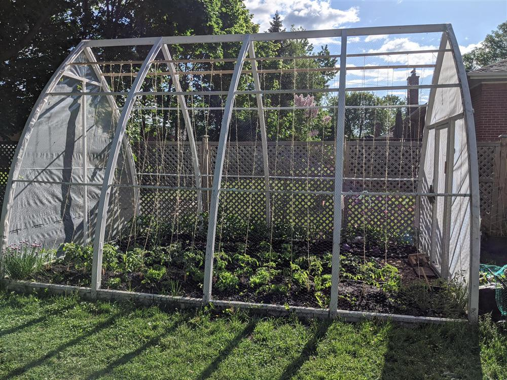 Sau 5 năm nỗ lực trồng rau quả sạch cho hai con trai thưởng thức, mẹ đảm đã thu lại những thành quả bất ngờ-2