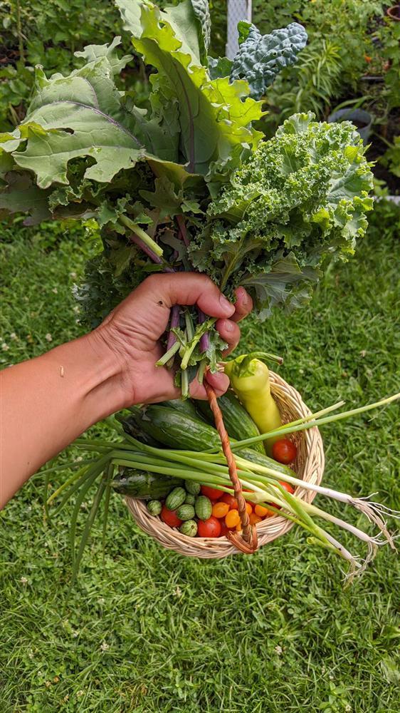 Sau 5 năm nỗ lực trồng rau quả sạch cho hai con trai thưởng thức, mẹ đảm đã thu lại những thành quả bất ngờ-9