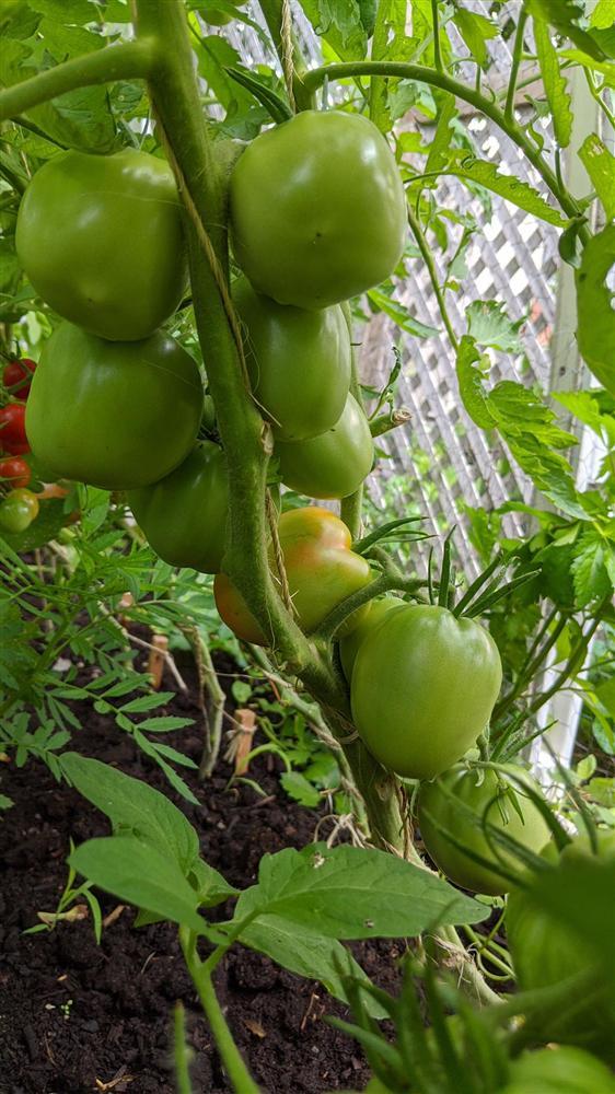Sau 5 năm nỗ lực trồng rau quả sạch cho hai con trai thưởng thức, mẹ đảm đã thu lại những thành quả bất ngờ-23