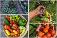 Sau 5 năm nỗ lực trồng rau quả sạch cho hai con trai thưởng thức, mẹ đảm đã thu lại những thành quả bất ngờ