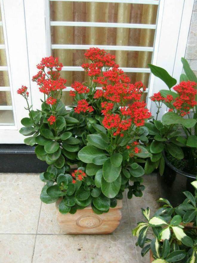 4 loại cây trồng trong nhà có thể giúp trừ tà khí, xua đuổi vận đen, tài lộc kéo đến-5