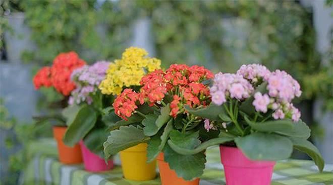 4 loại cây trồng trong nhà có thể giúp trừ tà khí, xua đuổi vận đen, tài lộc kéo đến-6
