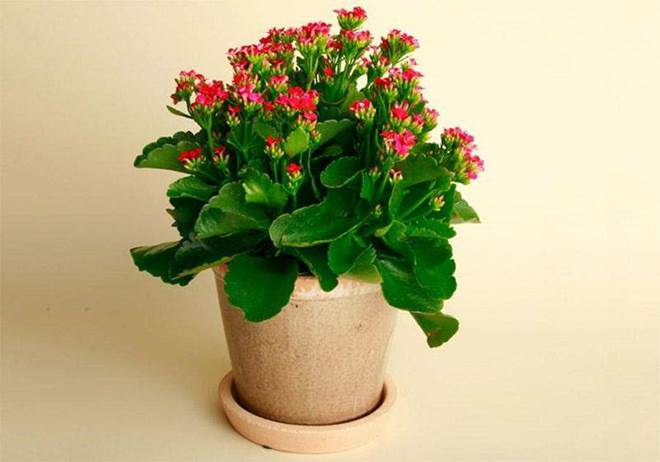 4 loại cây trồng trong nhà có thể giúp trừ tà khí, xua đuổi vận đen, tài lộc kéo đến-7