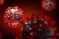 """Phát hiện kháng thể có thể """"vô hiệu hóa hoàn toàn"""" virus SARS-CoV-2"""