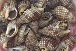 Ăn ốc vỉa hè ngon thật ngon, khoái thật khoái nhưng có vô vàn nguy cơ đáng kinh hãi luôn rình rập đe dọa sức khỏe-4
