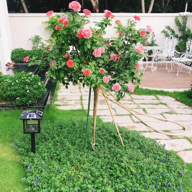 Biệt thự nhà vườn ngập tràn các loại hoa của gia đình ở Bình Dương-5
